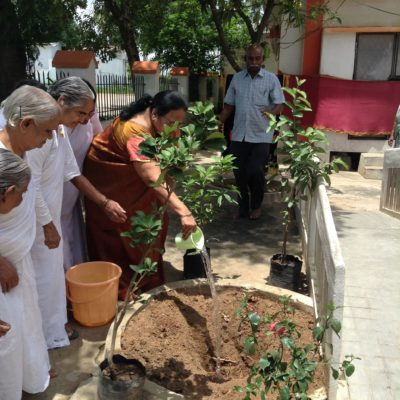 Tree_plantation_oldage